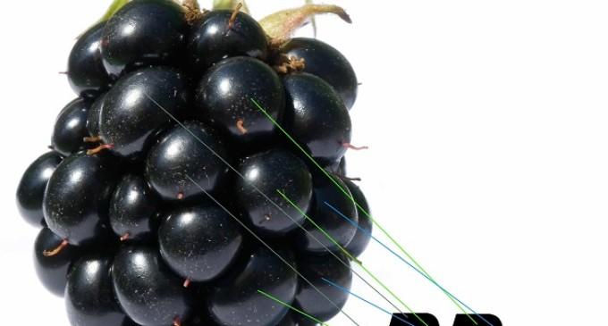 Google, Cisco y SAP se interesan por BlackBerry