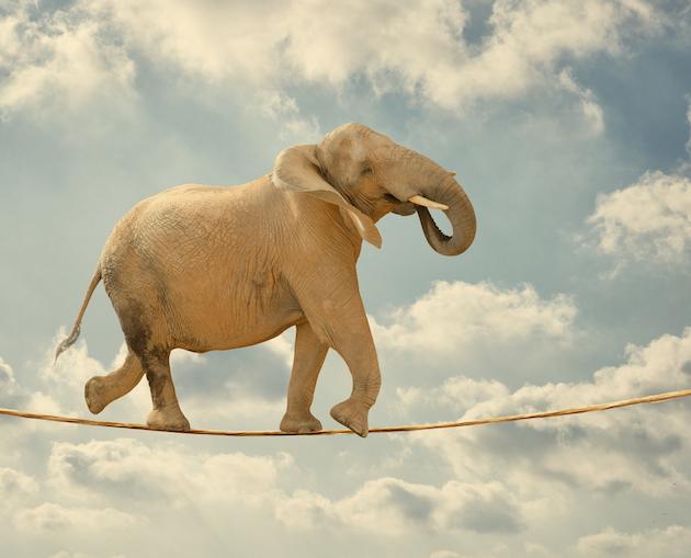 elefante_agil