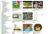 La escabrosa historia de Silk Road, el mayor mercado on-line mundial de venta de drogas