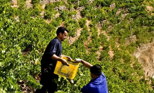 Los drones, al servicio de una mayor eficiencia energética en los viñedos