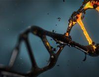 ¿Cómo es el proceso del análisis del genoma humano?