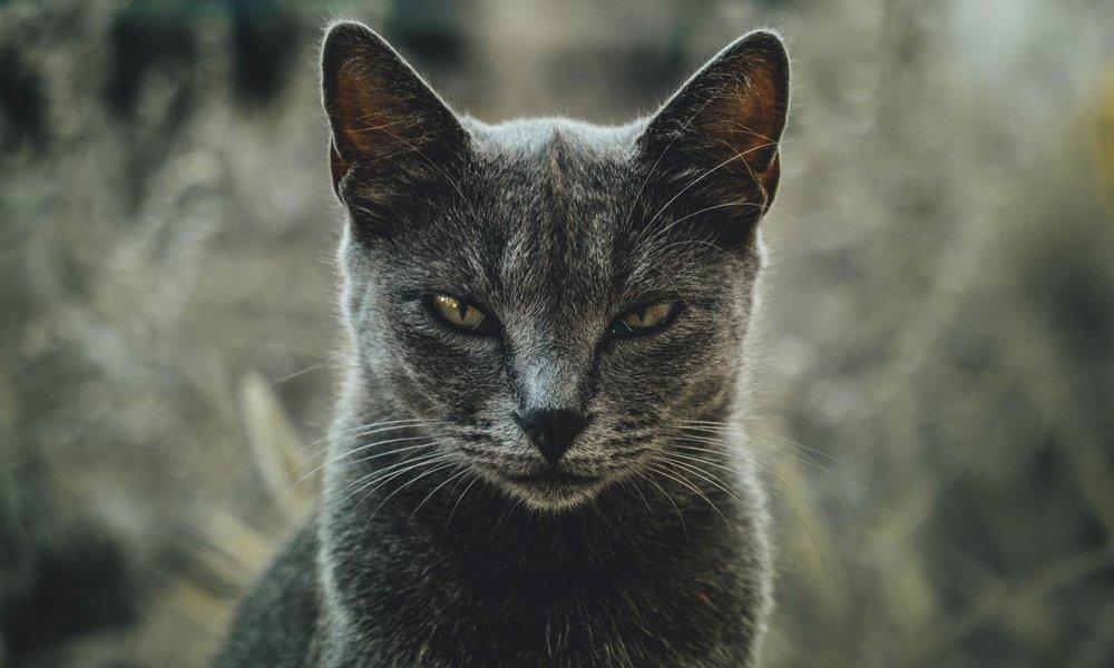 Ataque conocido como Meow ha borrado más de 4.000 bases de datos de Elasticsearch y MongoDB