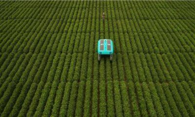 El último proyecto de Google X: Mineral, para el desarrollo de tecnología y robots para agricultura